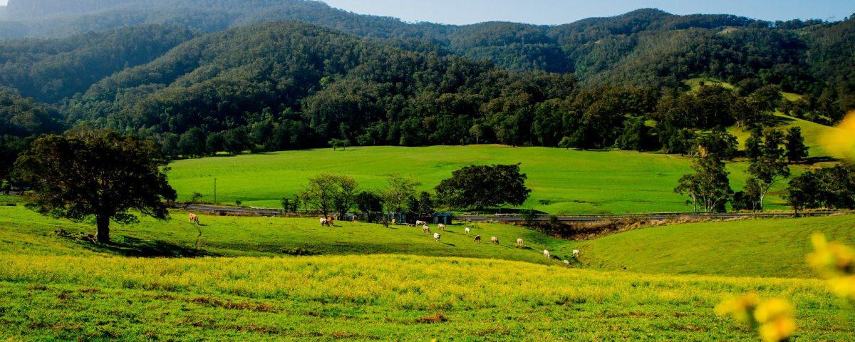 Landscape Photography Wollongong